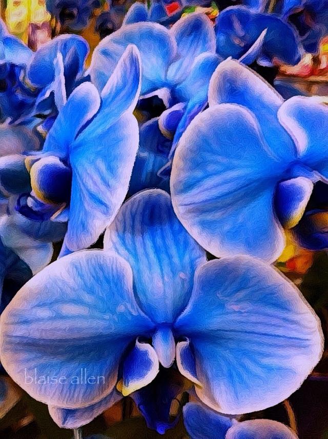 Blue Orchids by Blaise Allen