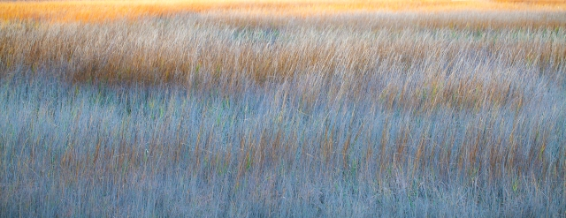 Sunset Marsh by Jo Ann Tomaselli