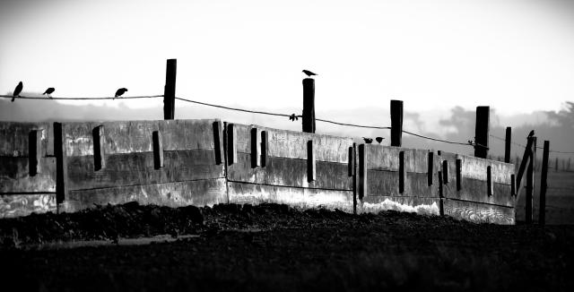 Jo Ann Tomaselli, Birds & Fence