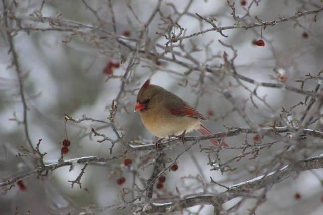 Jessica Bell, Winter Bird